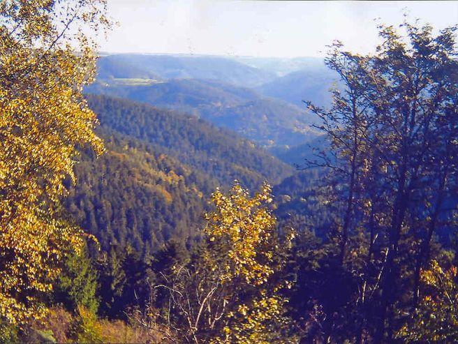 Black Forest Torte (Schwarzwaelder Kirschtorte) - Auf dem Teisenkopf
