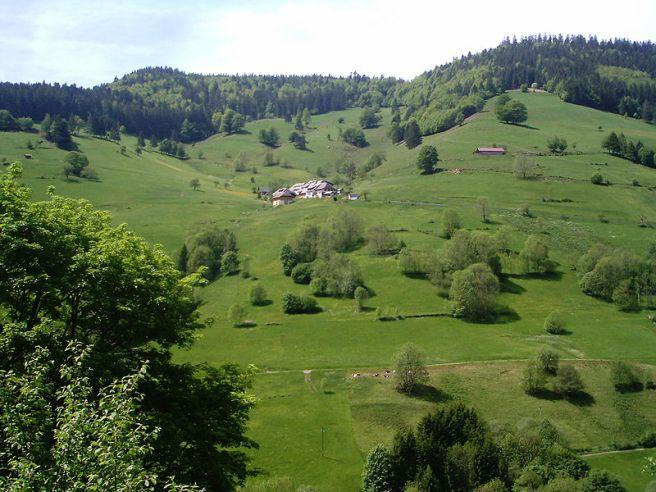 Black Forest Torte (Schwarzwaelder Kirschtorte) - Black Forest