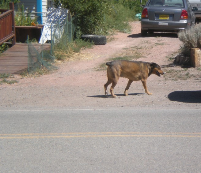 Madrid, NM: A Ghost Town Reborn - Typical friendly Resident Madrid Dog