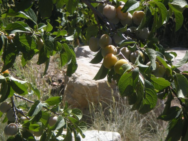 Madrid, NM: A Ghost Town Reborn - Apricots in Madrid, NM