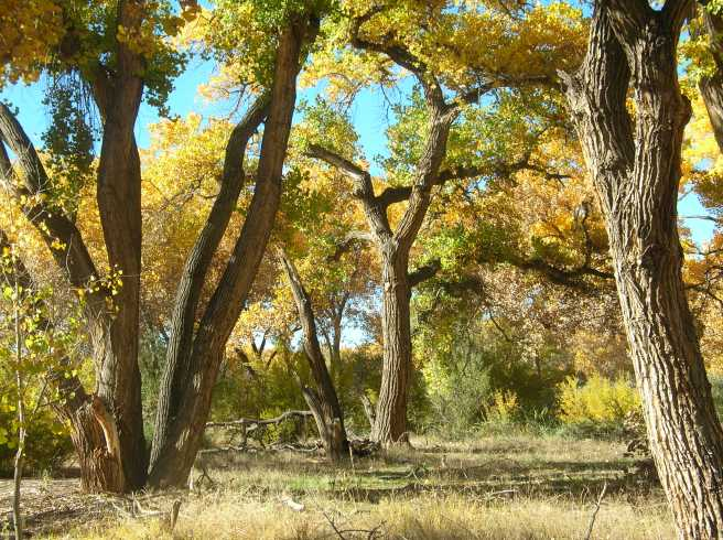 Autumn Pumpkin Stew with Caramelized Onions - Cottonwood Trees Along the Rio Grande River