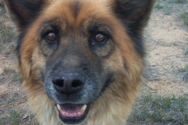 Remembering Simba: A special dog - Our beloved Simba