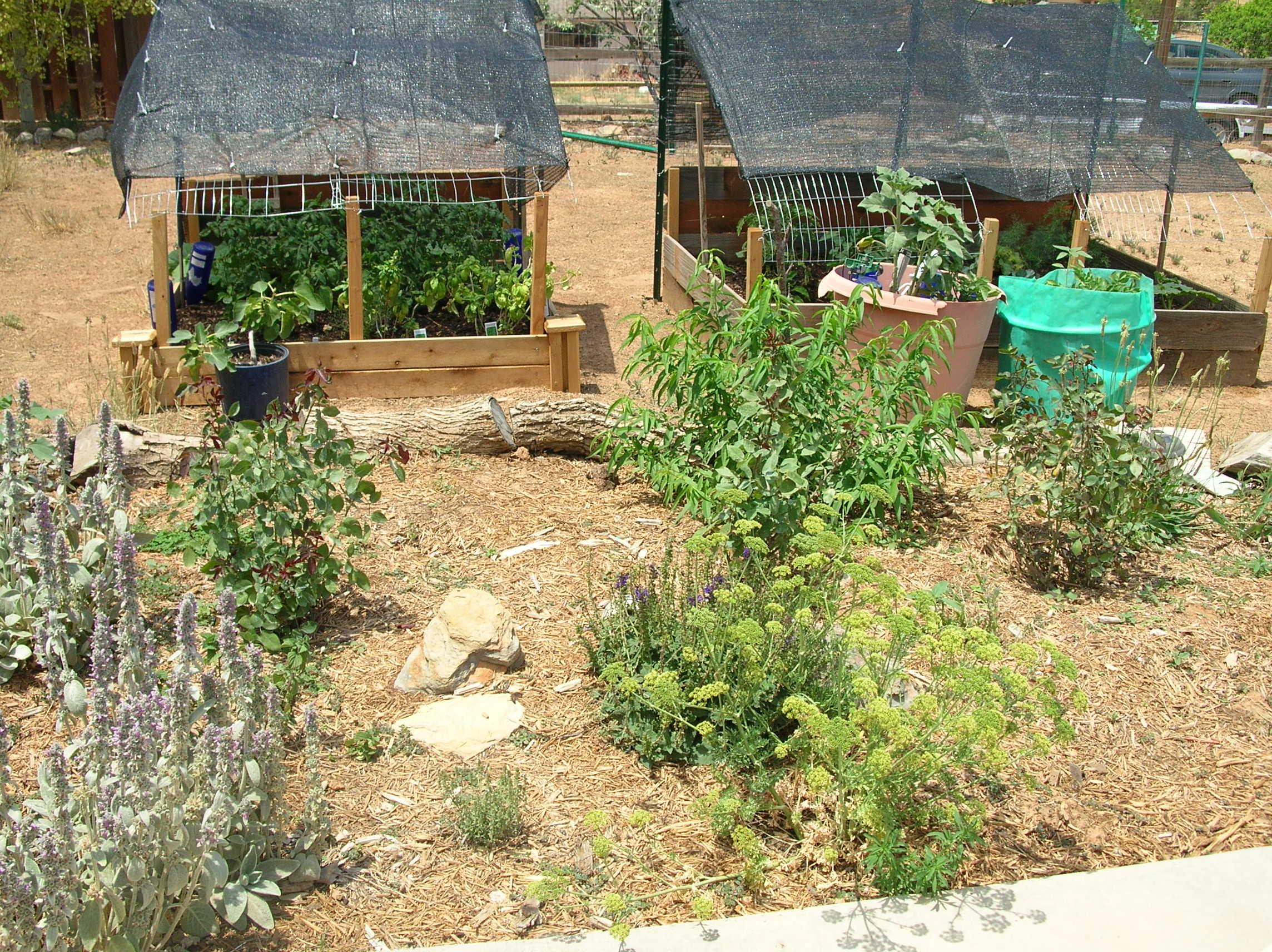 backyard garden 2011 gfcelebration