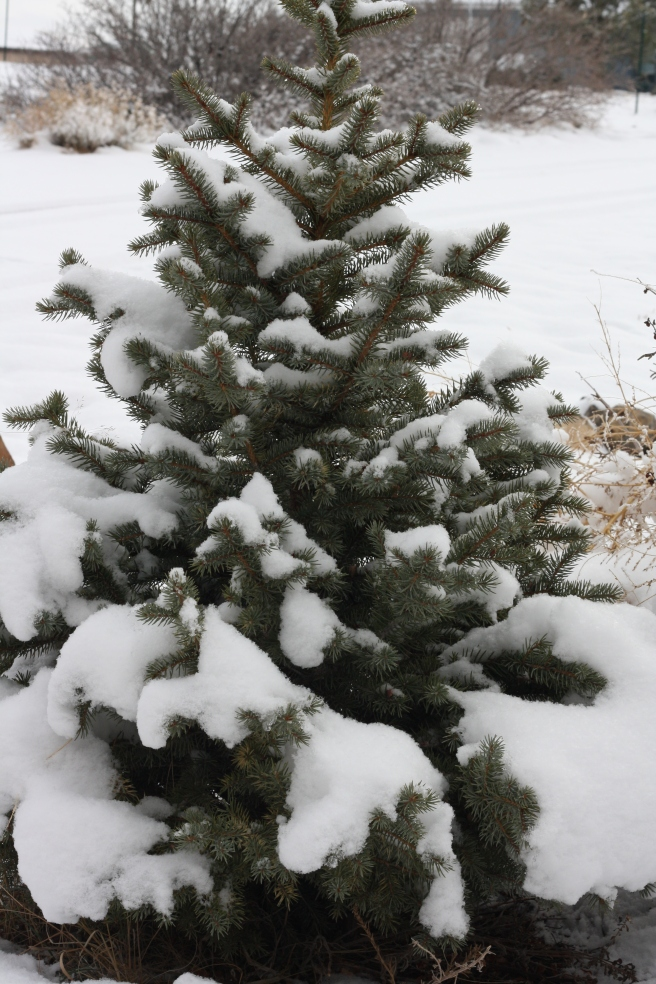 Pueblo Gingerbread House, - Snow-covered tree in the garden