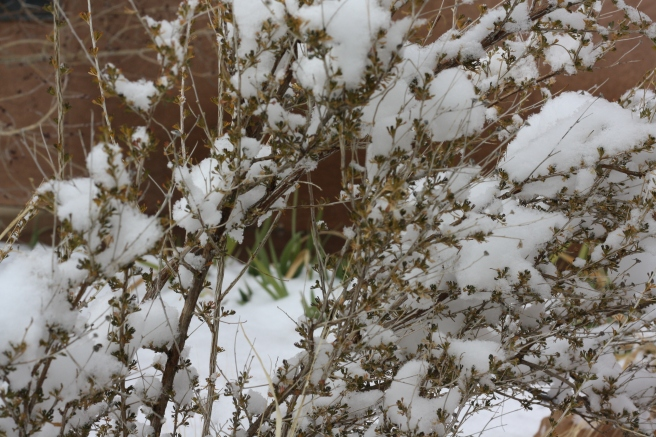 Pueblo Gingerbread House - Wintery scene in the garden